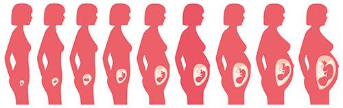Těhotenství týden po týdnu | Foto: Shutterstock