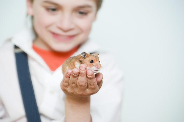 Křeček jako domácí zvířátko pro děti | Foto: Shutterstock