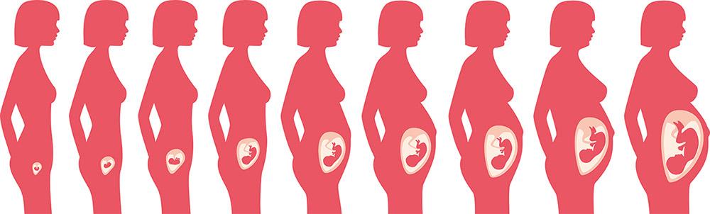 Těhotenství týden po týdnu
