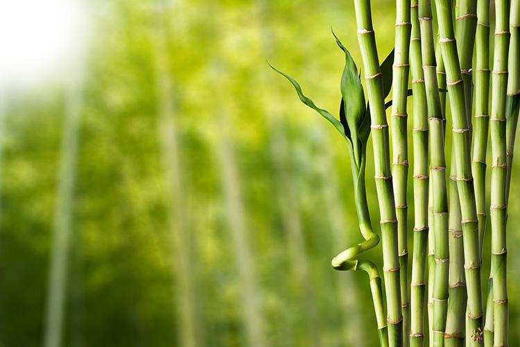 Bambus pro výrobu oblečení | Foto: Shutterstock